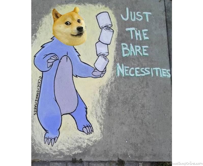 doge bear