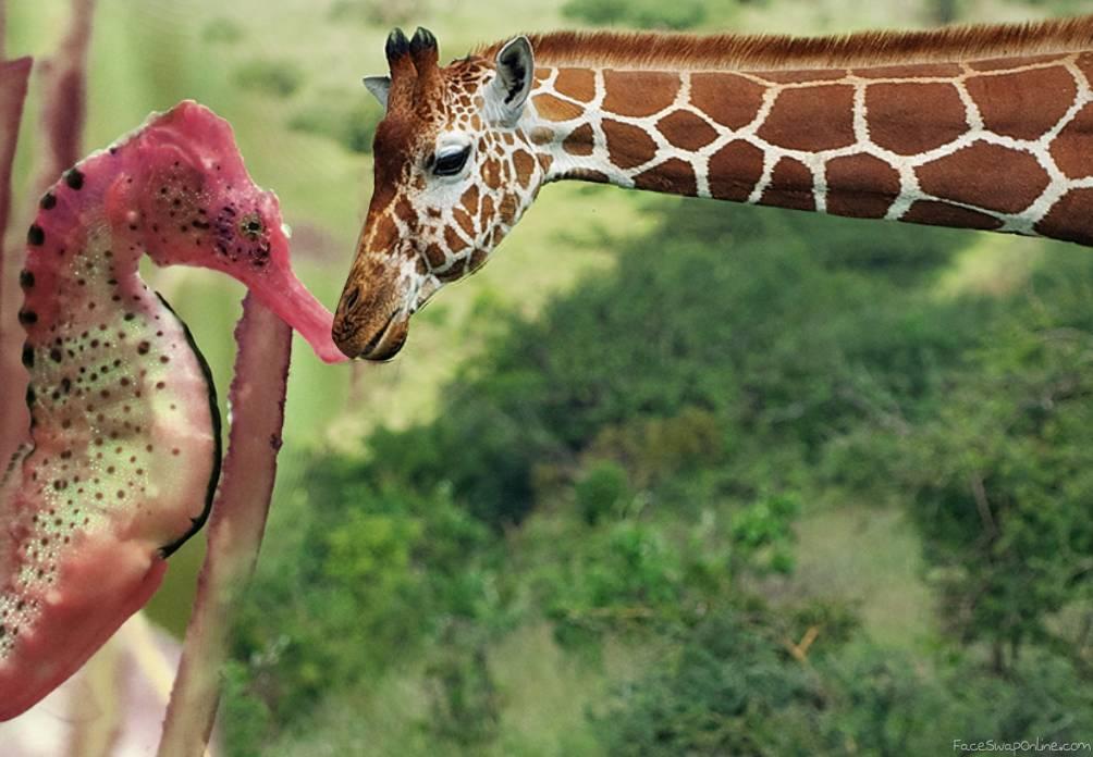 Giraffe meets Seahorse