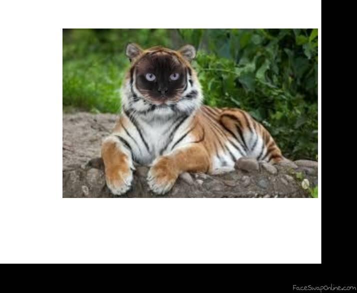 Crossbred cat