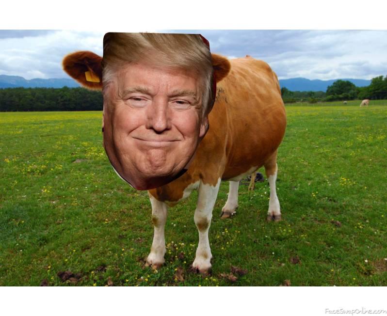 Cow Trump