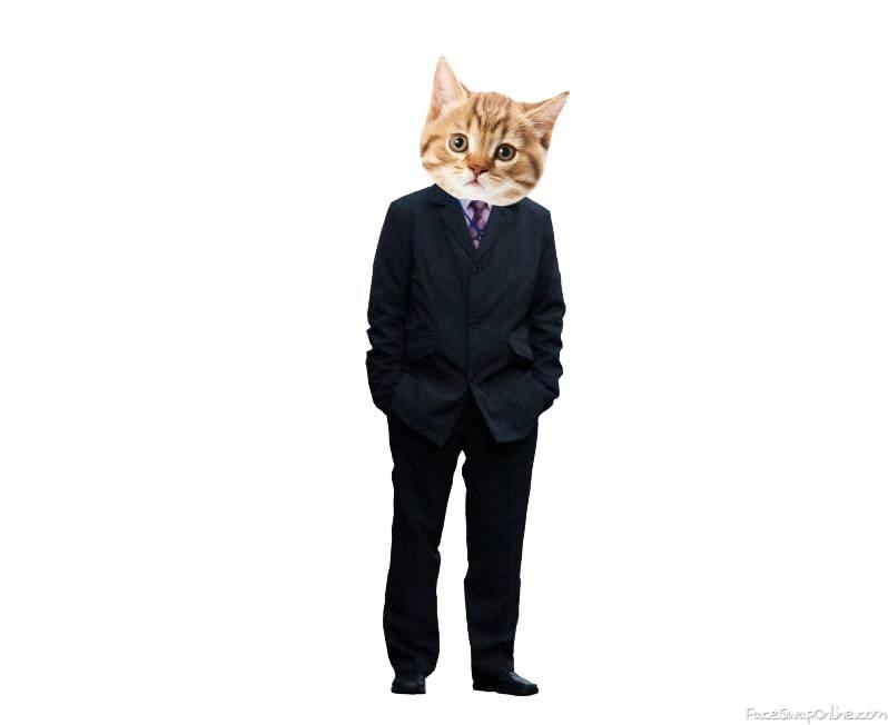 Suit Cat