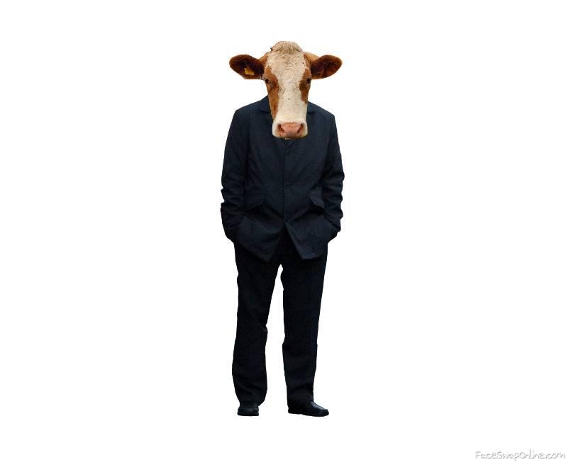 Suit Cow