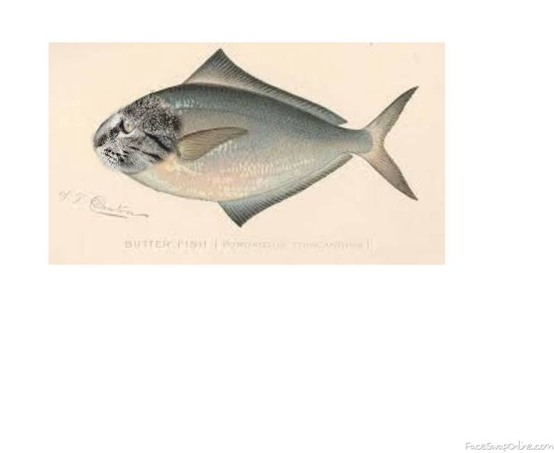 catfish (litterally)