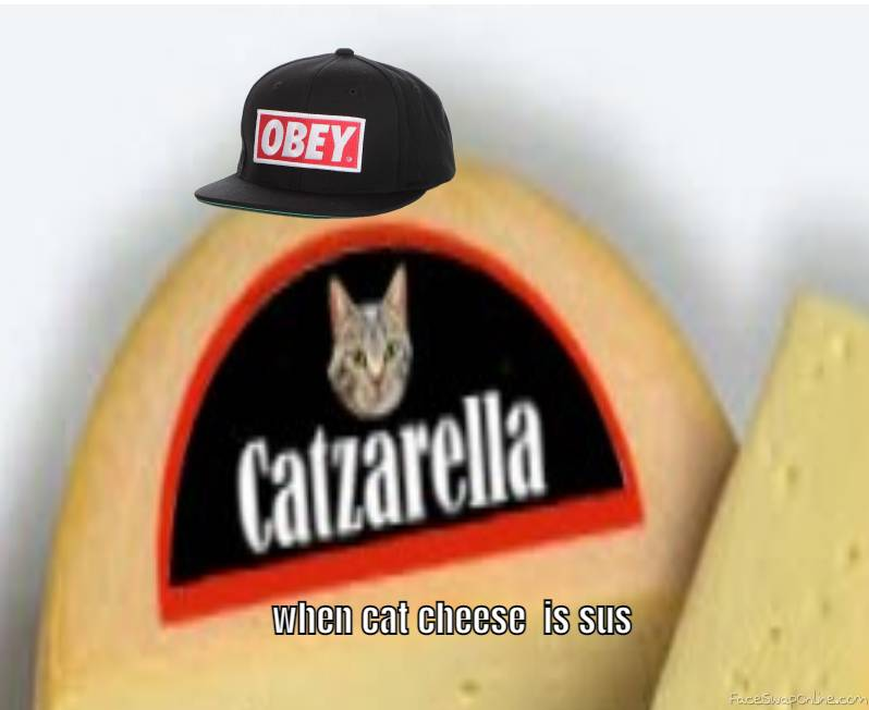 when cat cheese is sus lol