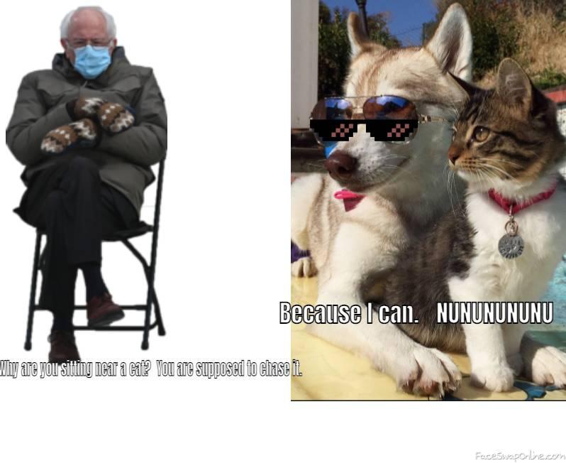 DOG NEAR CAT