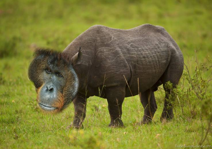 Orangurhino