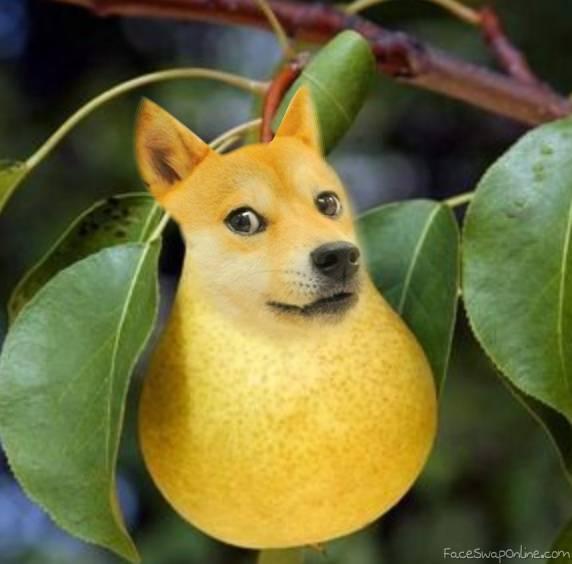 Doge Pear