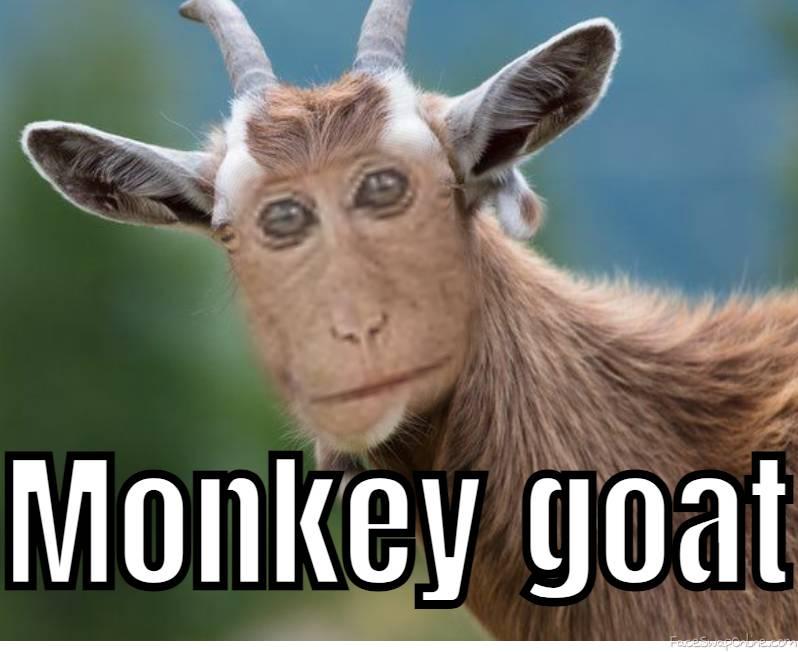 Monkey Goat