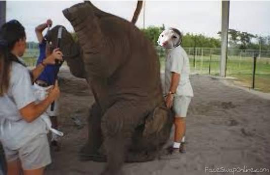 DOG HELPING ELEPHANT
