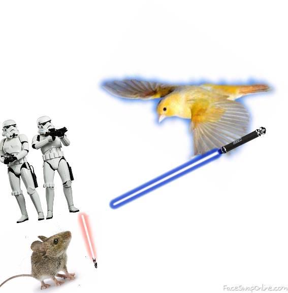 Jedi Bird Attacks Sith Mouse