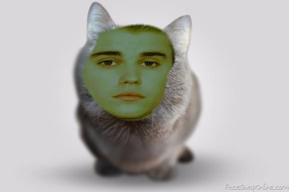 Justin The Kitty