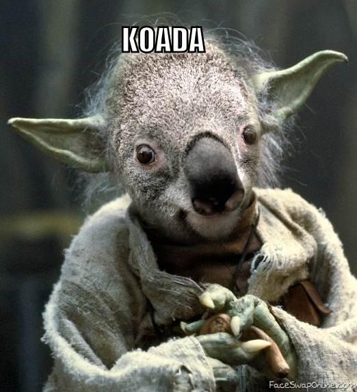 Koada