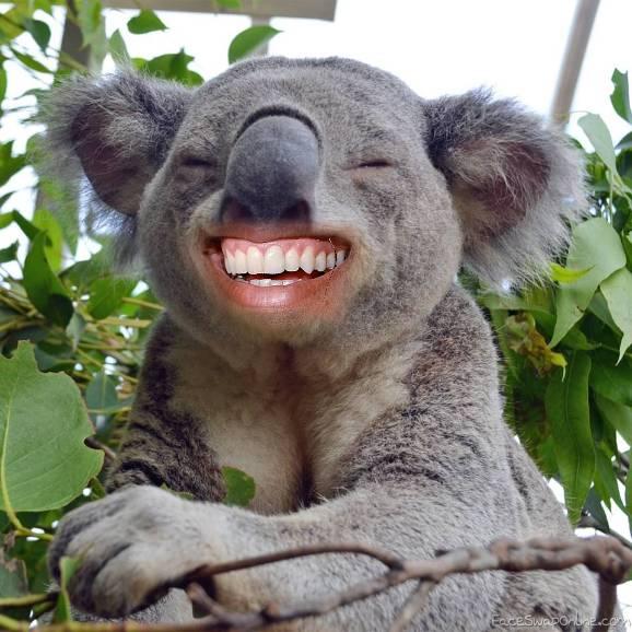 Laughing Koala