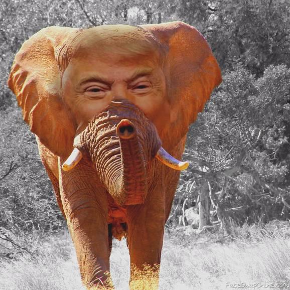 The Trumpephant