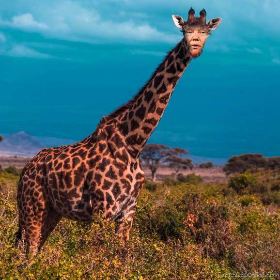 Trump Giraffe