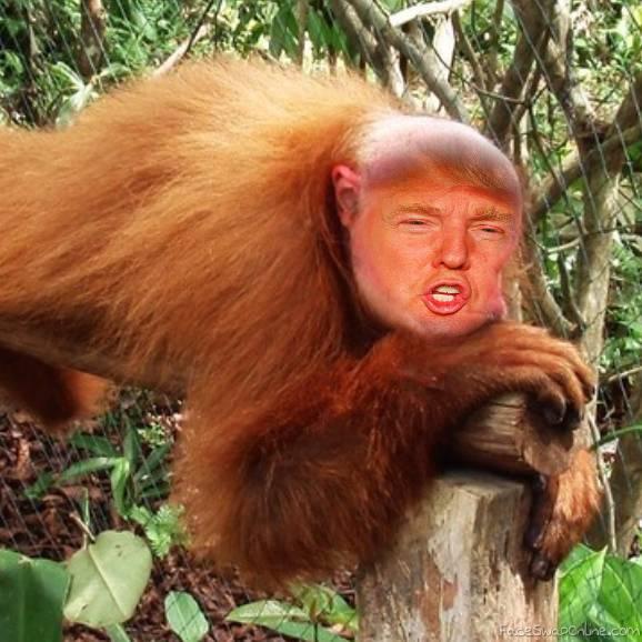 Trumpmonkey