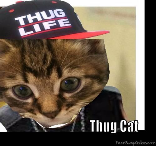 thug cat